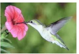 Salvemos-a-las-aves_Page_08-724x1024